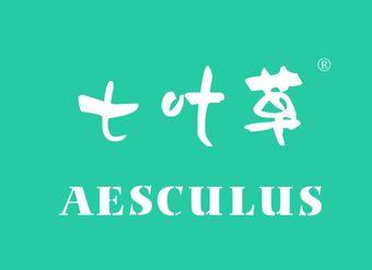 02-V048 七叶草 AESCULUS