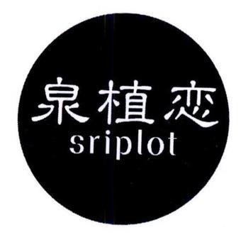 3-151668 泉植恋 SRIPLOT