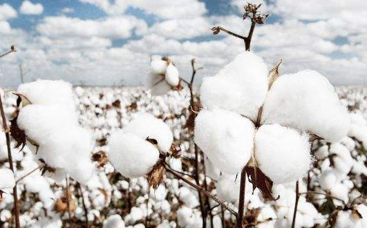 棉花商标名称图片大全