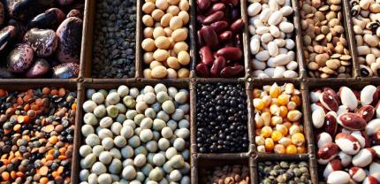 豆类属于多少类商标?
