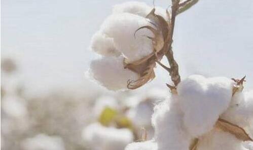 棉织品应该注册哪一类商标?